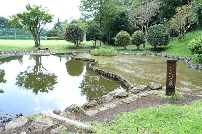 白尾山公園の「トンボの池」