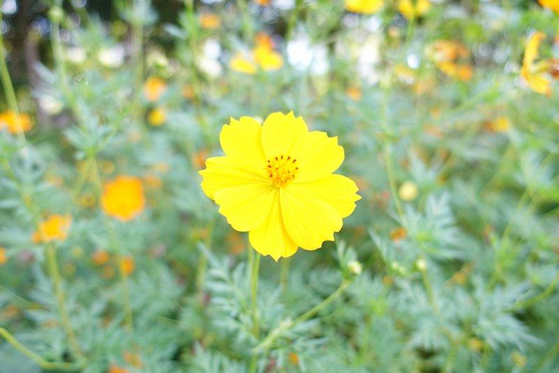 外神東公園のお花