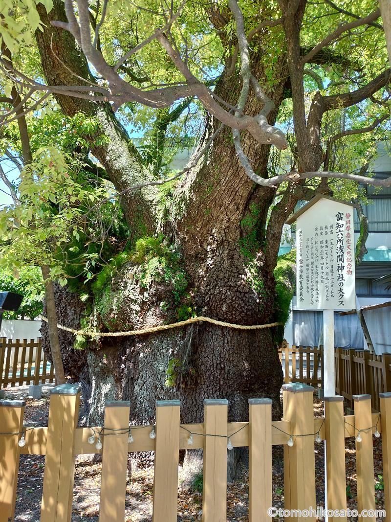 富知六所浅間神社の御神木
