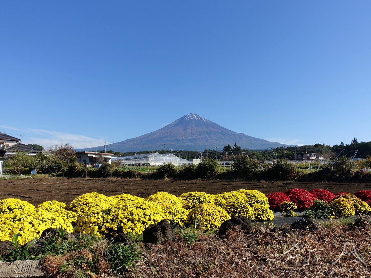 富士山とざる菊