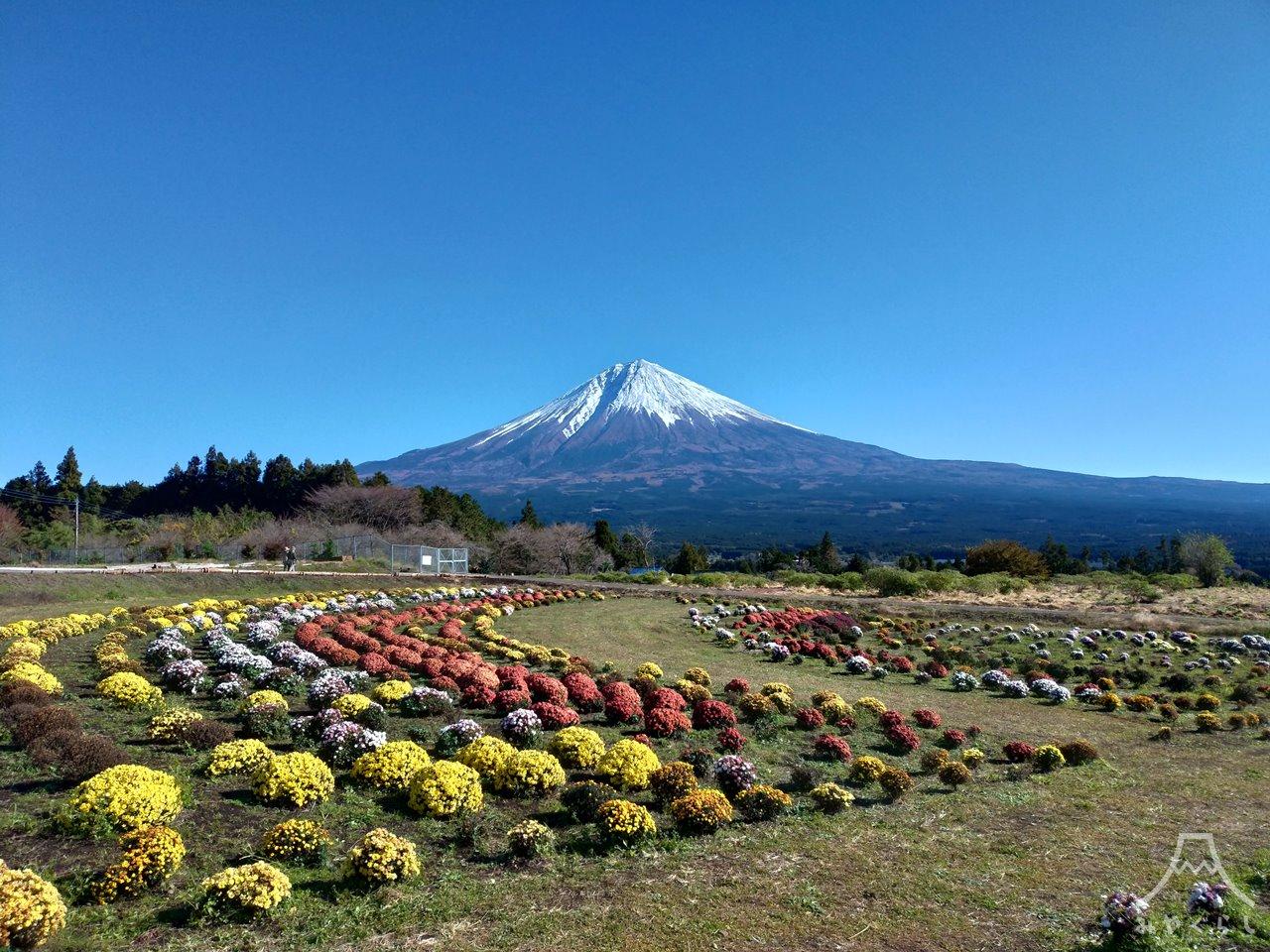 白糸自然公園から見た富士山